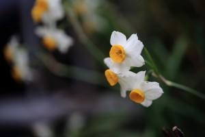 庭の花-1