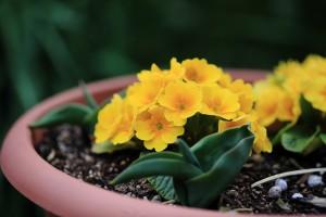 庭の花-2