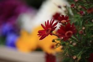 庭の花-4