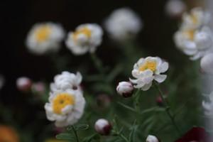 庭の花-5